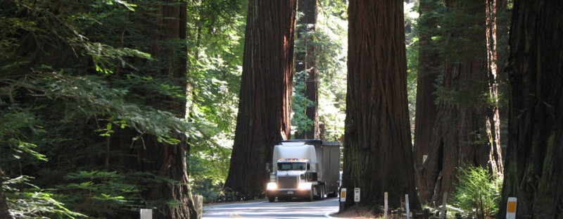 Green Trucking Quote - White Semi Truck Going Through a Narrow Passage Between Giant Redwood Trees